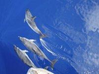 帆船海豚观游泳平行