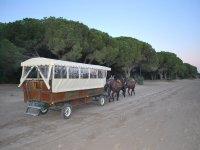 Excursiones en coches de caballos en Donana