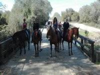Horse carriage tours in Doñana