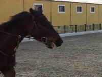 caballos mansos