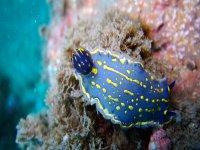 naturaleza increible bajo el agua