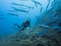 Nadando entre barracudas en el norte de Mallorca