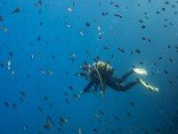 Buceando entre especies marinas
