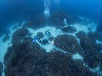 A ras de suelo marino en Es Colomer
