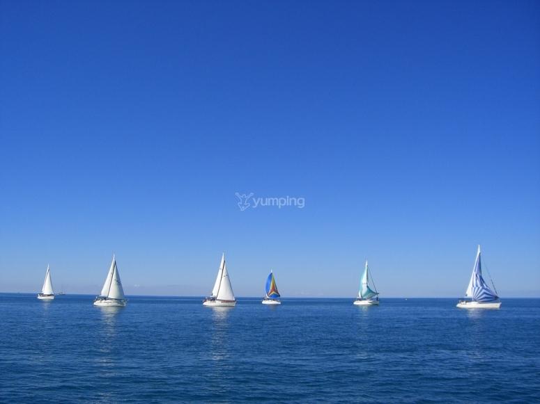 Grupo de veleros
