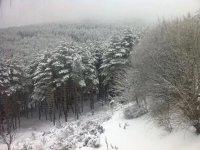 Belle stampe invernali