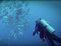 Buceando junto al banco de peces