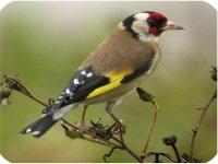 Safari Ornithologico