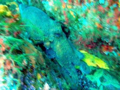 Discover Scuba Diver en Finisterre