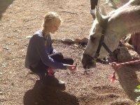 Alimentando al equino blanco