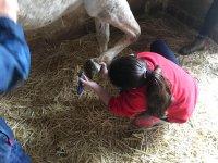 Cleaning horseshoes