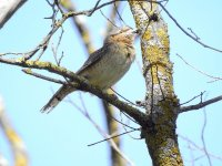 Ornithological routes