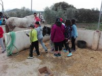 Children visiting horses