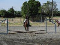 Aprendiendo equitacion profesional