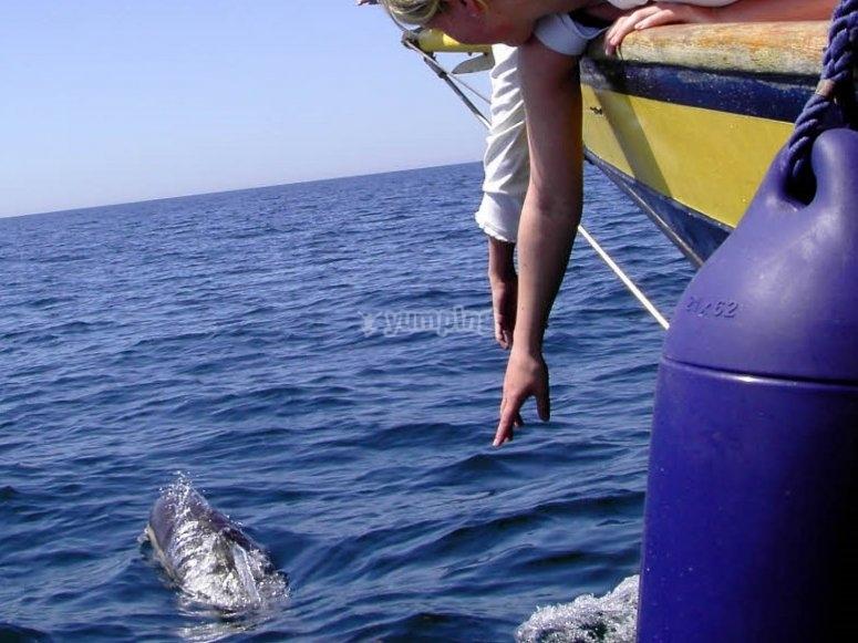 Muy cerca de los delfines