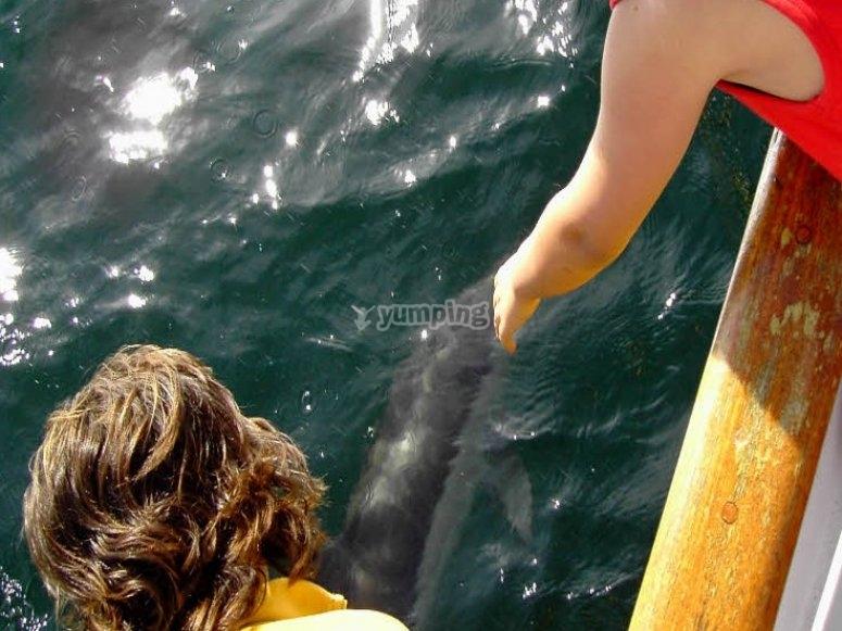 Observando a los delfines
