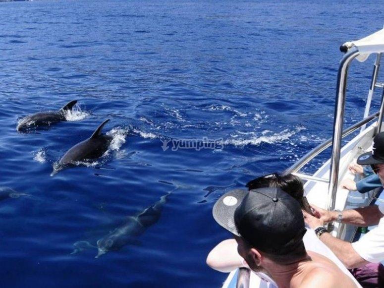 Avistamiento de cetáceos en Benalmádena