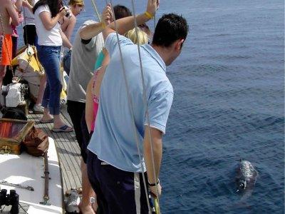Avistamiento cetáceos Benalmádena 2 horas adulto