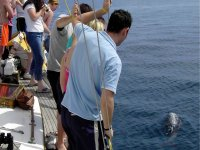 Cetacean Watching in Benalmádena - adults 2 hours