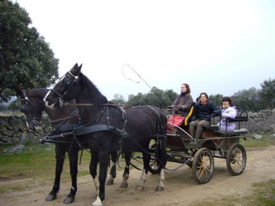 Horse Carriage Tour, Collado Mediano, 1h