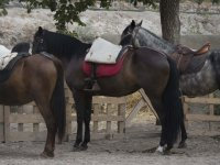 pista rutas a caballo