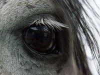 Precioso ojo de caballo