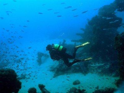 Simply Diving