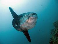 Bucea y observa especies marinas
