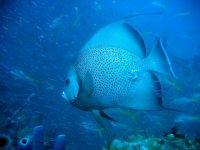 Photo Red Sea