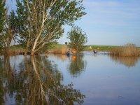 Pasando con los kayaks entre los arboles