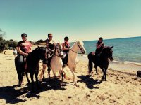 小马传送路径海滩路径海滩两个三匹马