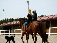 两匹马和狗骑在湖两