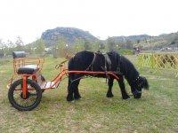 carruaje pony