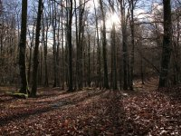 Adentrate en los bosques vascos en quad