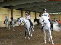 Aprendiendo a domar caballos