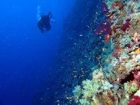 在地中海潜水