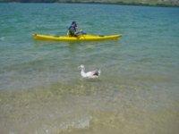 Piragïsta in individual canoe
