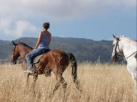 集团执行路线离开围栏马和骑手