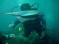 Various dives