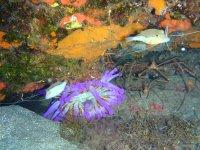 Corales de colores