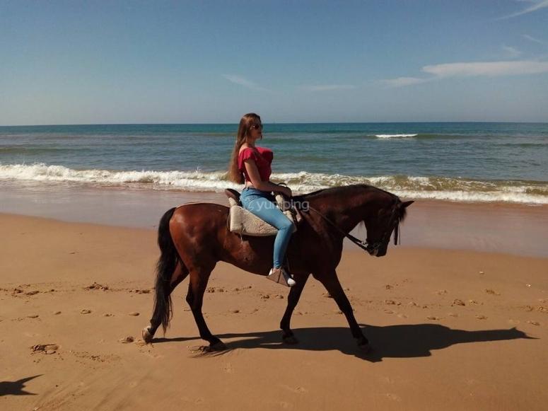 Amazon équitation cheval