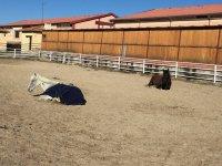 Caballos descansando en la pista