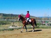 Paseando con el caballo por la pista