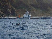 皮划艇观赏海豚独木舟之旅