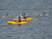 皮艇皮划艇和独木舟游览特内里费定义