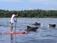 海豚瞄准SUP桨冲浪