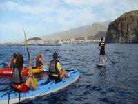 站起来桨冲浪看海豚