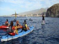 皮划艇和独木舟旅行定义海豚游览