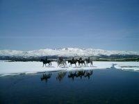 Gredos a caballo, ruta a caballo por la nieve