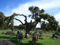 Rutas a caballo disfrutando de la naturaleza